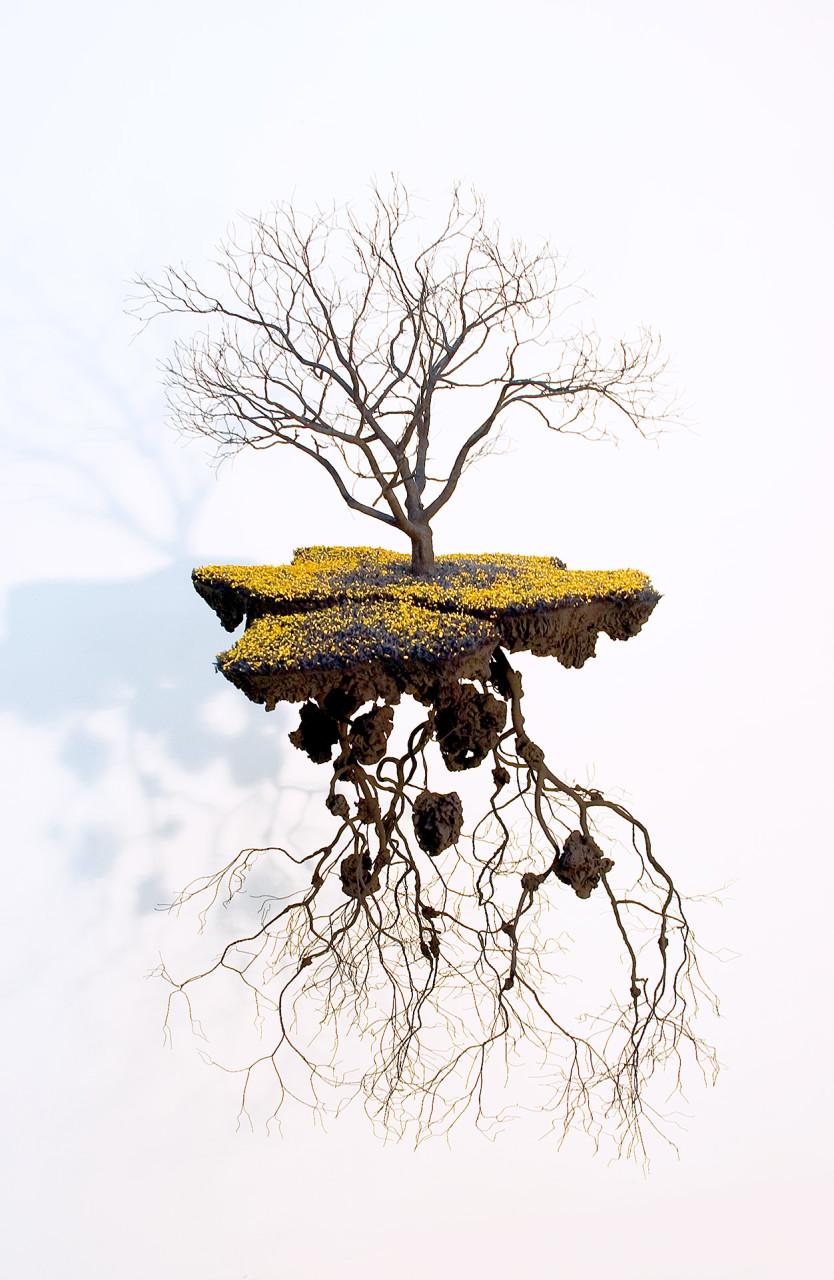 les-sculptures-darbres-suspendus-et-les-racines-cubaines-de-jorge-mayet-04