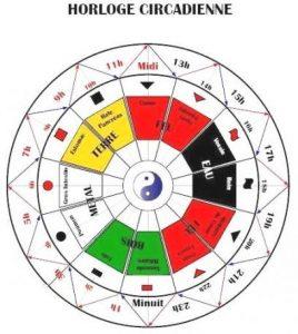 Horloge-circadienne-2