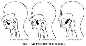 Position de la langue