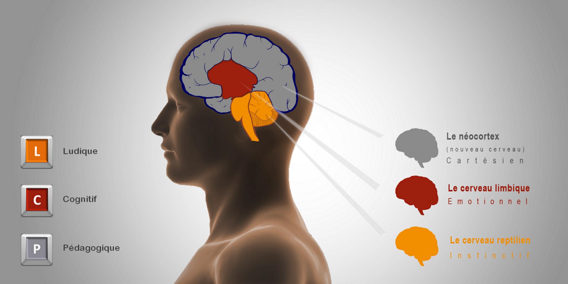 3-cerveaux-3-fondements-2016