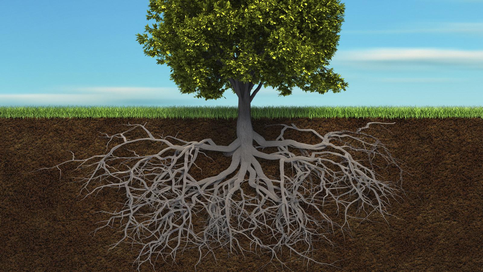 les-racines